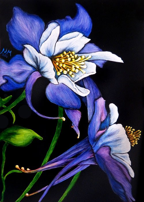 """Purple Columbine"" original fine art by Monique Morin Matson"
