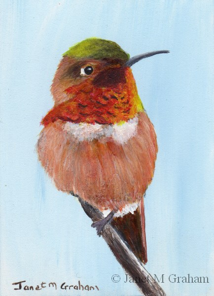 """Rufous Hummingbird ACEO"" original fine art by Janet Graham"
