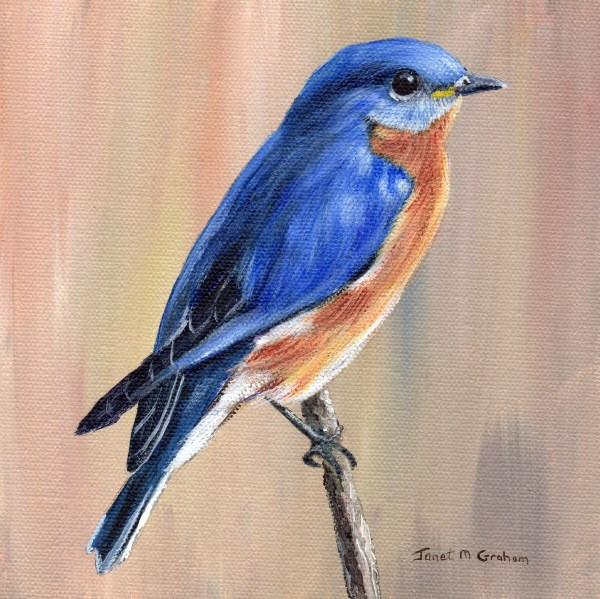 """Eastern Bluebird"" original fine art by Janet Graham"
