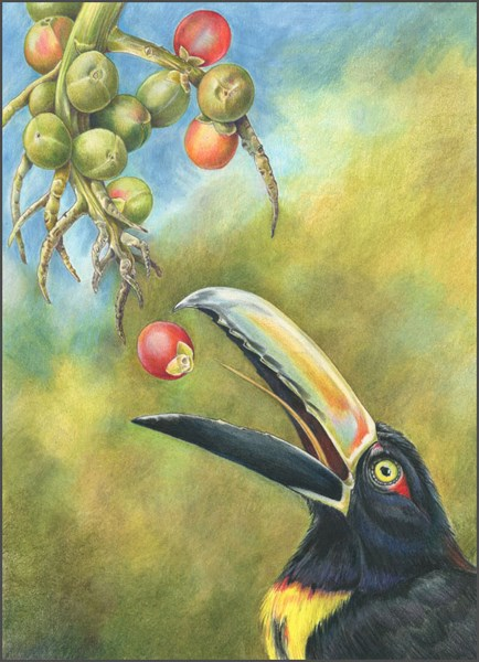 """Wildlife Painting, Bird Nature, Aracari The Art of Nature, Fine Art by Mindy Lighthipe"" original fine art by Mindy Lighthipe"