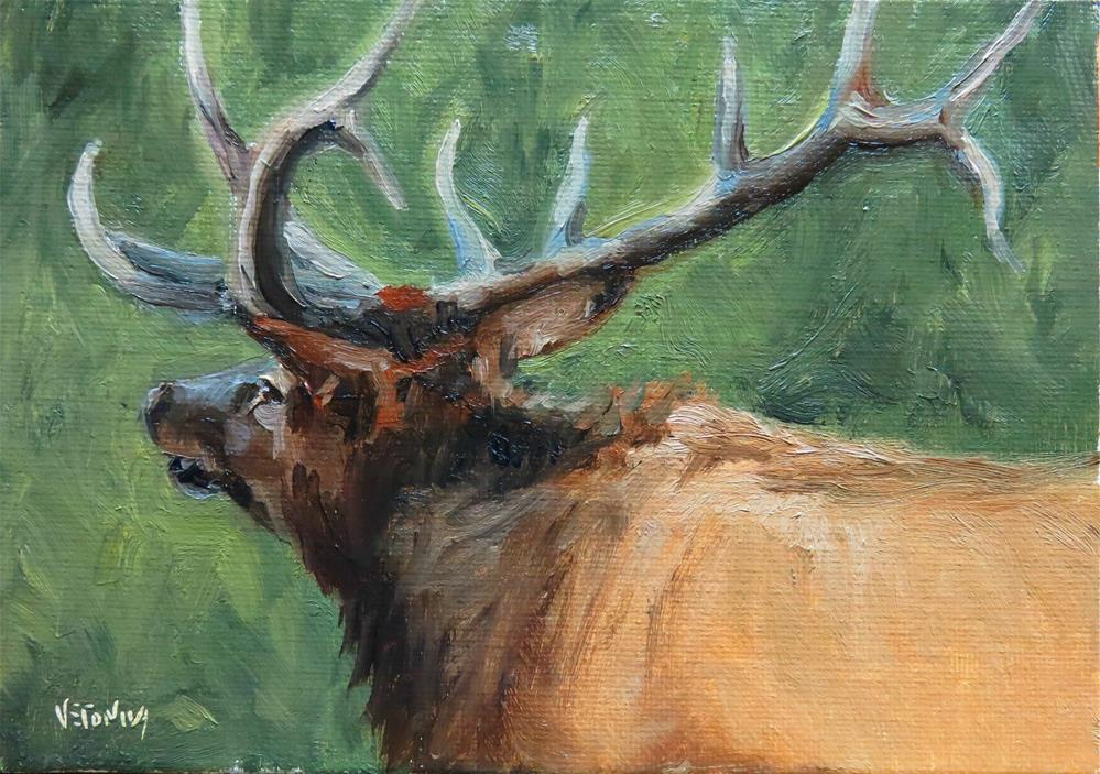 """Bull elk study-Day 4"" original fine art by Veronica Brown"