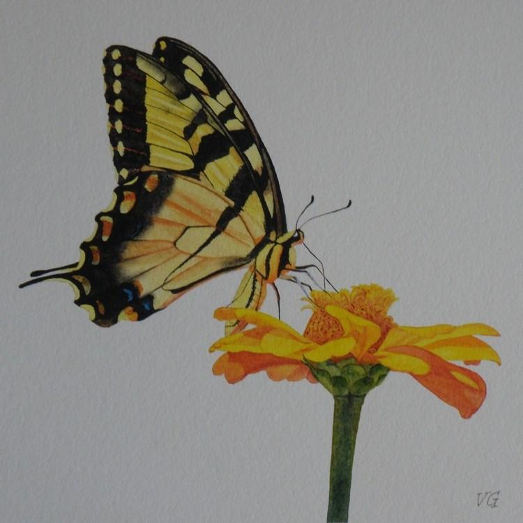 """Swallowtail Butterfly Watercolor Study"" original fine art by Vicki Greene"