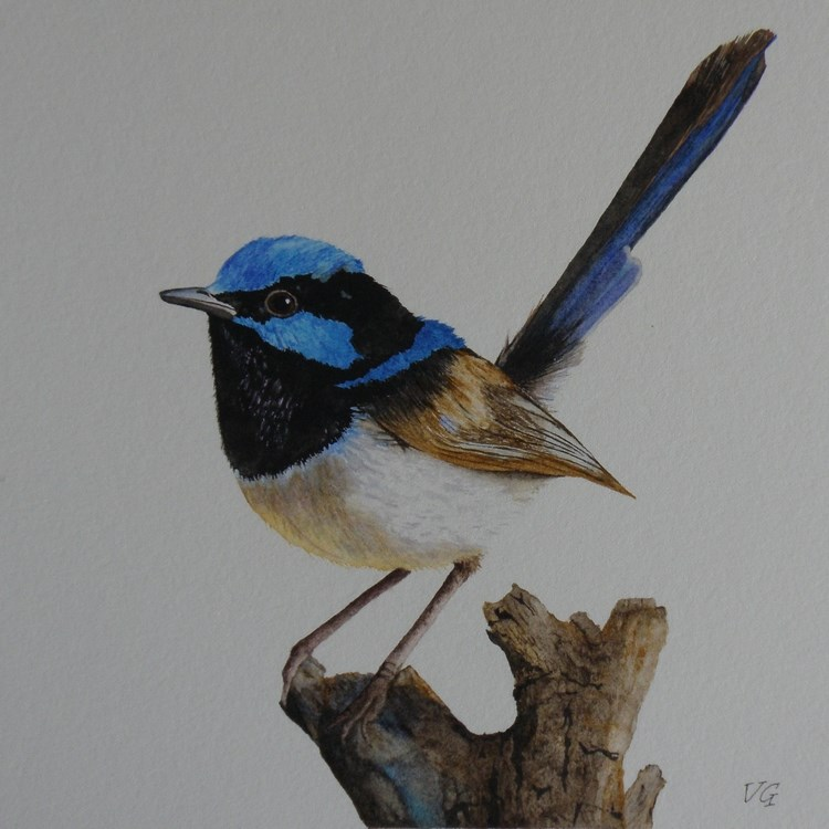 """Fairy Wren"" original fine art by Vicki Greene"