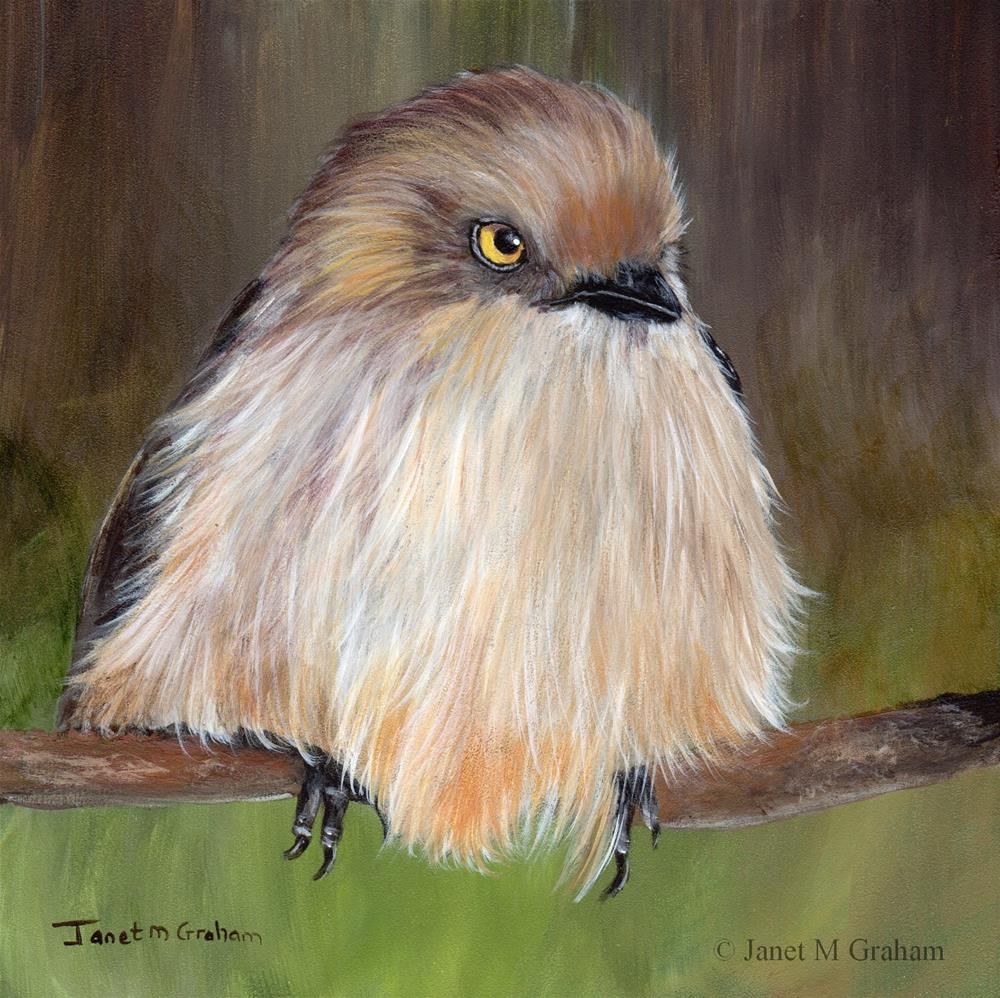 """Bushtit"" original fine art by Janet Graham"