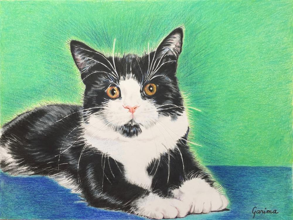 """Black and White Cat with Yellow Eyes"" original fine art by Garima Heath"