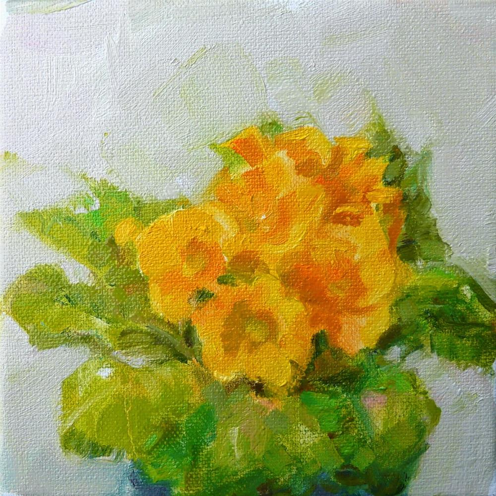 """Soft orange Prinrose,still life,oil on canvas,6x6,price$200"" original fine art by Joy Olney"