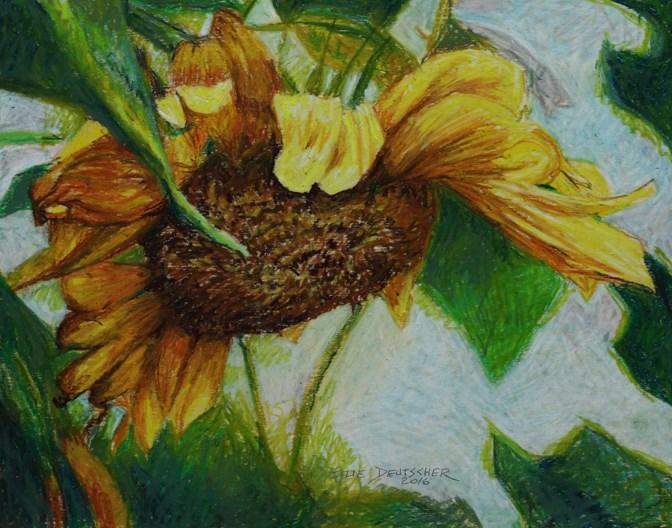 """""""sunflower"""" original fine art by Sue Deutscher"""