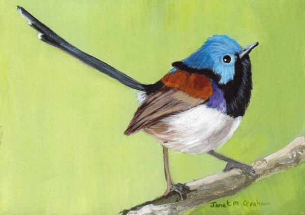 """Variegated Fairy Wren ACEO"" original fine art by Janet Graham"