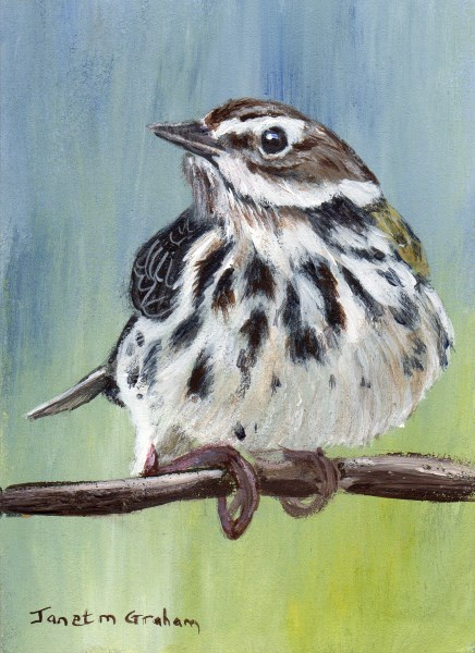 """Meadow Pipit ACEO"" original fine art by Janet Graham"