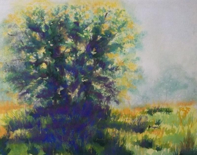 """Morning Backlight"" original fine art by Becky Chappell"