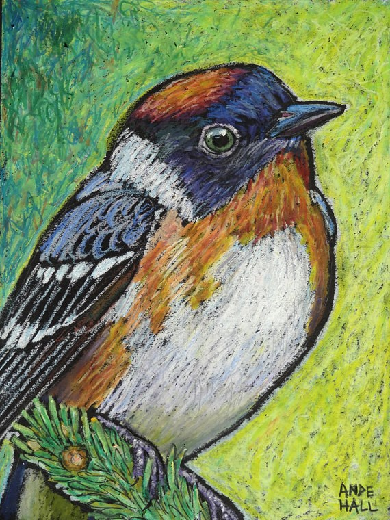 """Bay Breasted Warbler"" original fine art by Ande Hall"