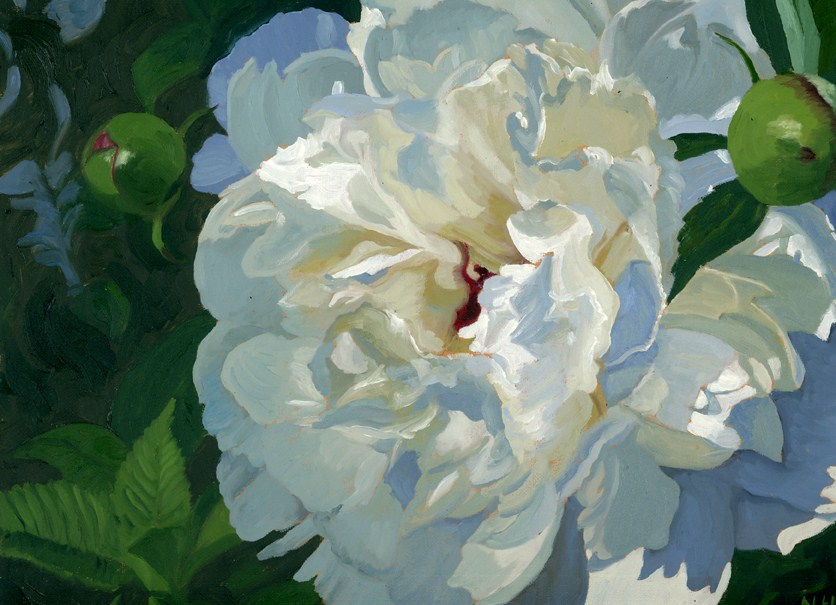 """Peony 2012 - Poetry in White"" original fine art by Nancy Herman"