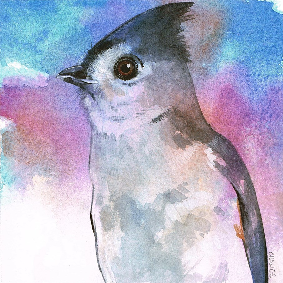 """No. 35 Tufted Titmouse"" original fine art by Annabel Chance"