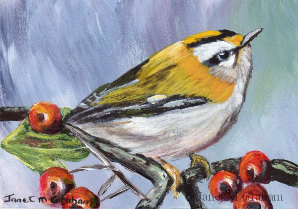 """Common Firecrest ACEO"" original fine art by Janet Graham"