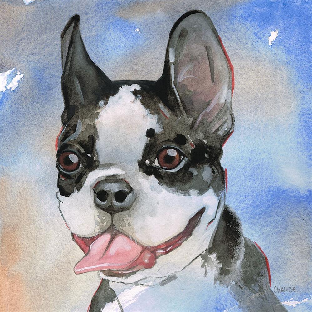 """""""No. 19 Boston Terrier"""" original fine art by Annabel Chance"""