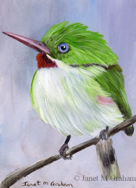 """Jamaican Tody ACEO"" original fine art by Janet Graham"