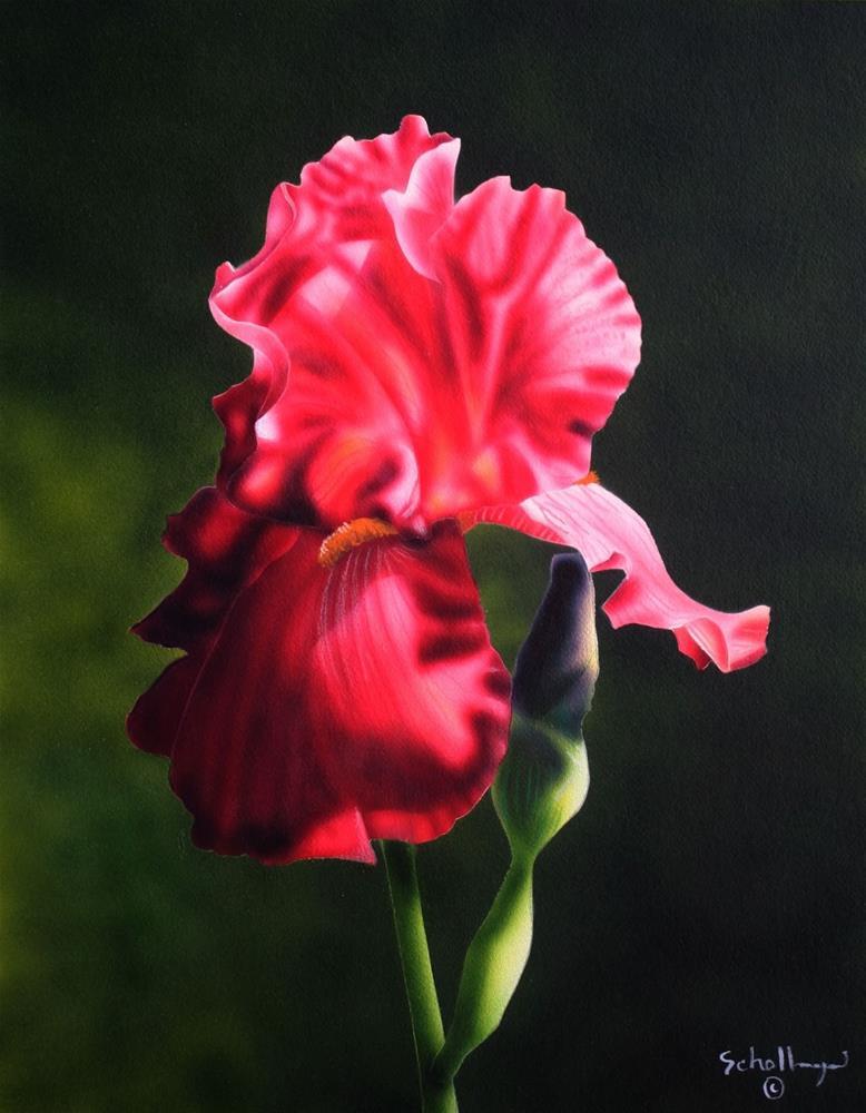 """""""Crimson Bloom"""" original fine art by Fred Schollmeyer"""