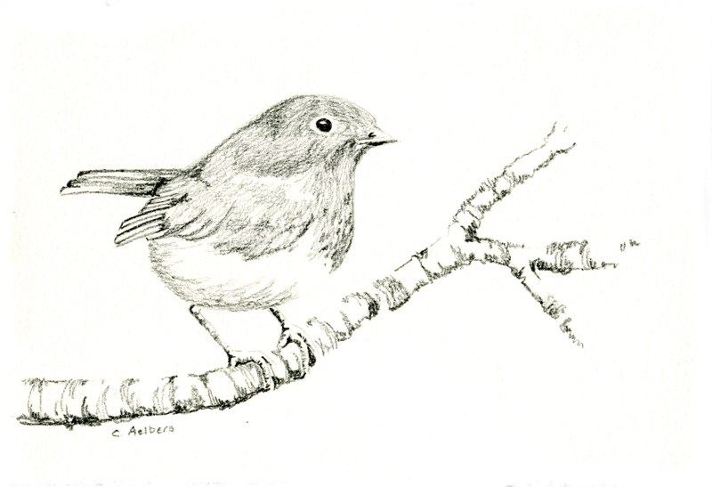 """Robin on a Branch"" original fine art by Corinne Aelbers"
