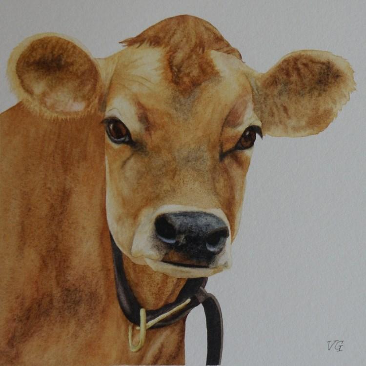 """Jersey Cow Watercolor Study"" original fine art by Vicki Greene"