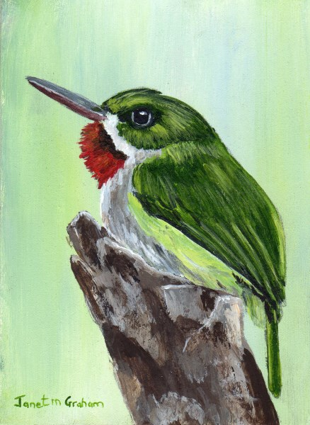 """Puerto Rican Tody ACEO"" original fine art by Janet Graham"