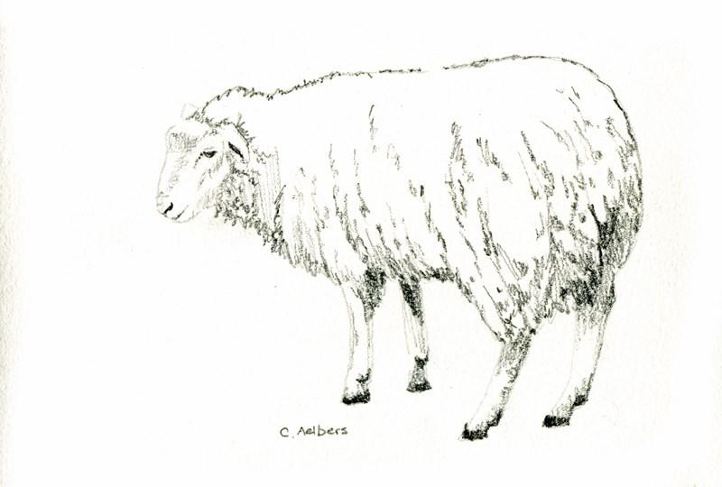 """Sheep on the Path"" original fine art by Corinne Aelbers"