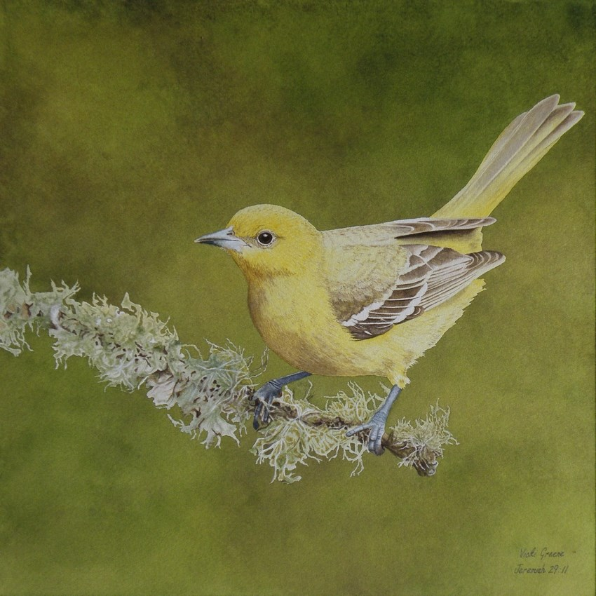 """Golden Morning"" original fine art by Vicki Greene"