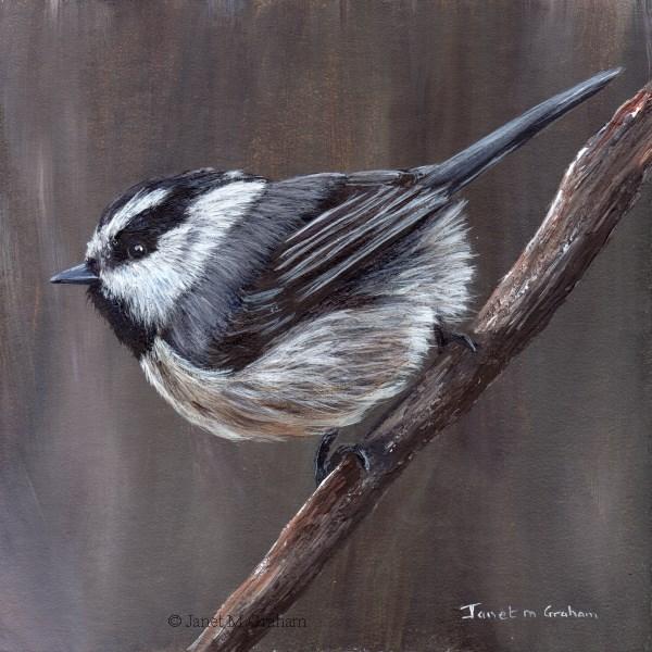 """Mountain Chickadee"" original fine art by Janet Graham"