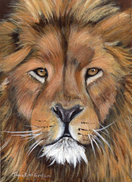 """Lion ACEO"" original fine art by Janet Graham"