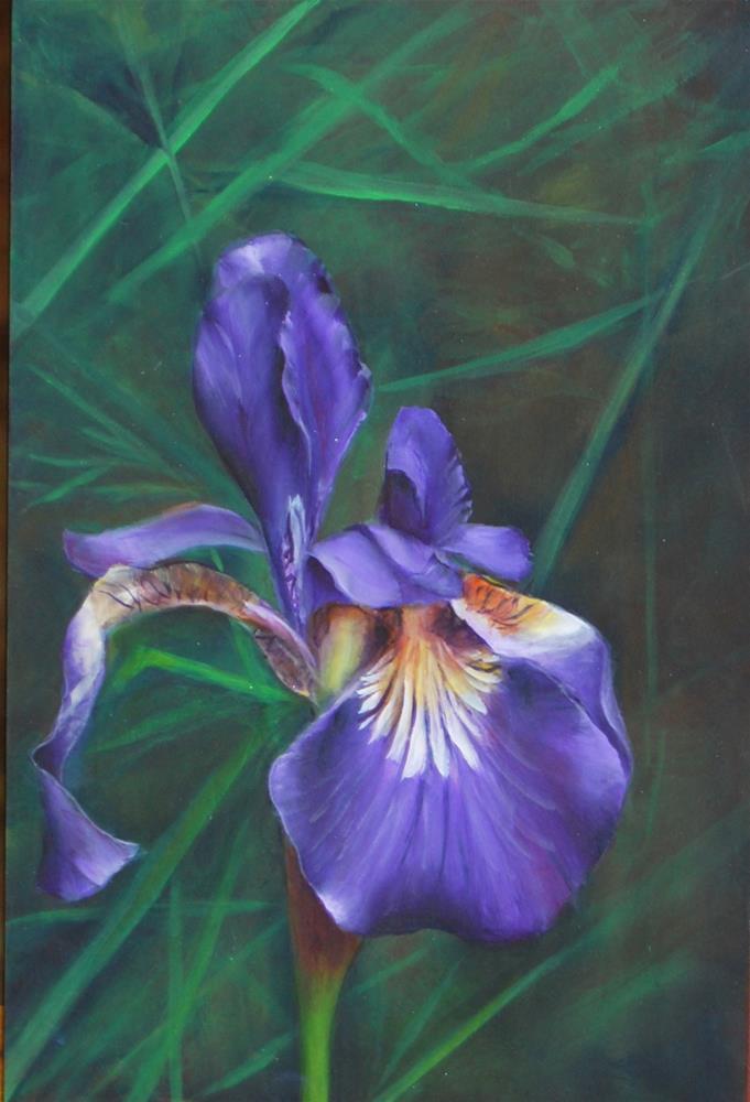 """""""Wild Iris 1"""" original fine art by Maureen Baker"""