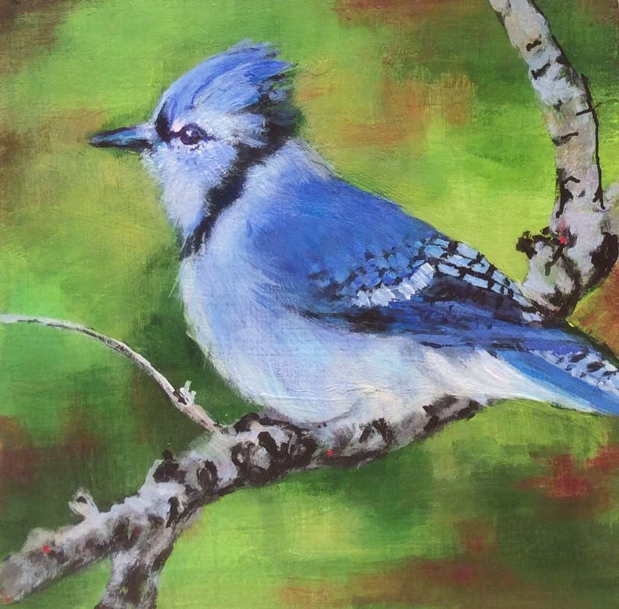 """Blue Jay"" original fine art by wendy black"