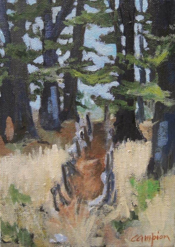 """235 Path Among the Cedars"" original fine art by Diane Campion"