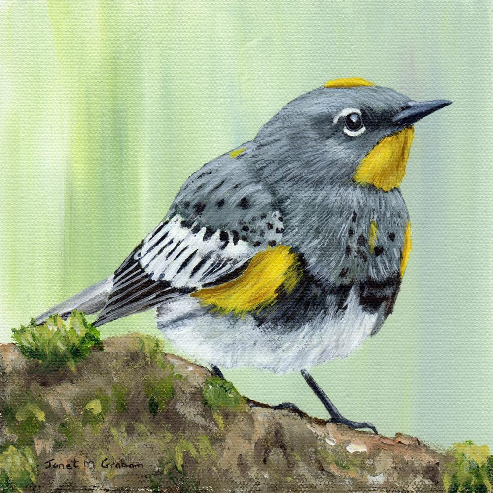 """Yellow Rumped Warbler"" original fine art by Janet Graham"