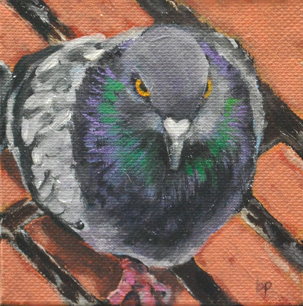 """Pigeon glare"" original fine art by Beverley Phillips"