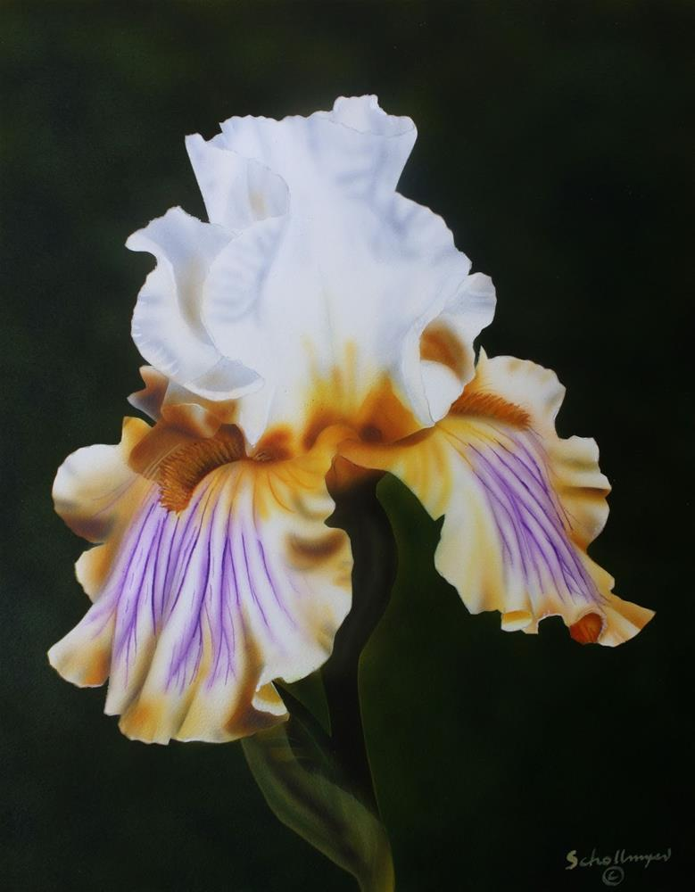 """Ivory Iris"" original fine art by Fred Schollmeyer"
