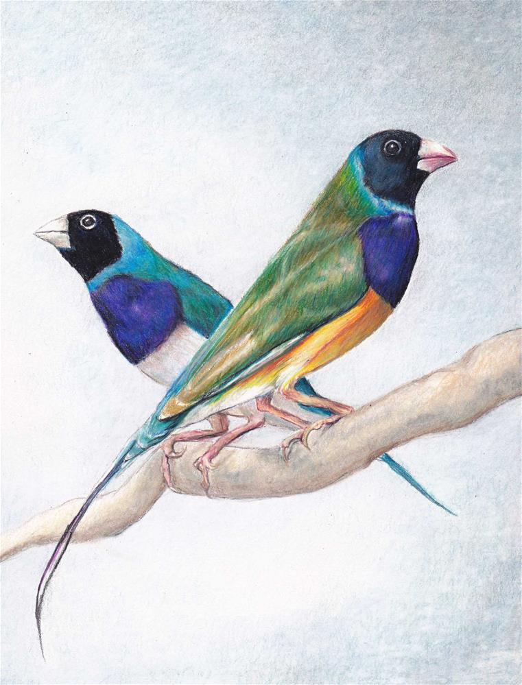 """Lady Gouldian Finches"" original fine art by Charlotte Yealey"