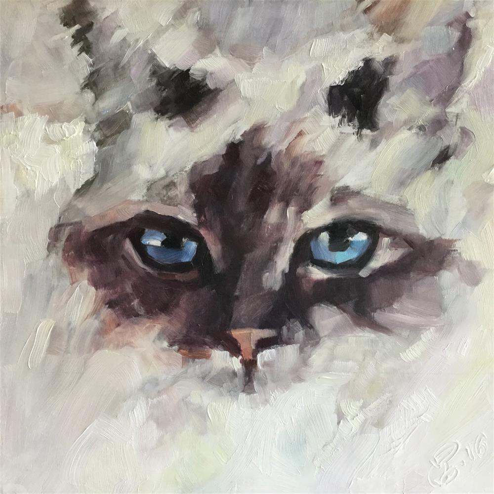"""Ragdoll"" original fine art by Paula Howson-Green"