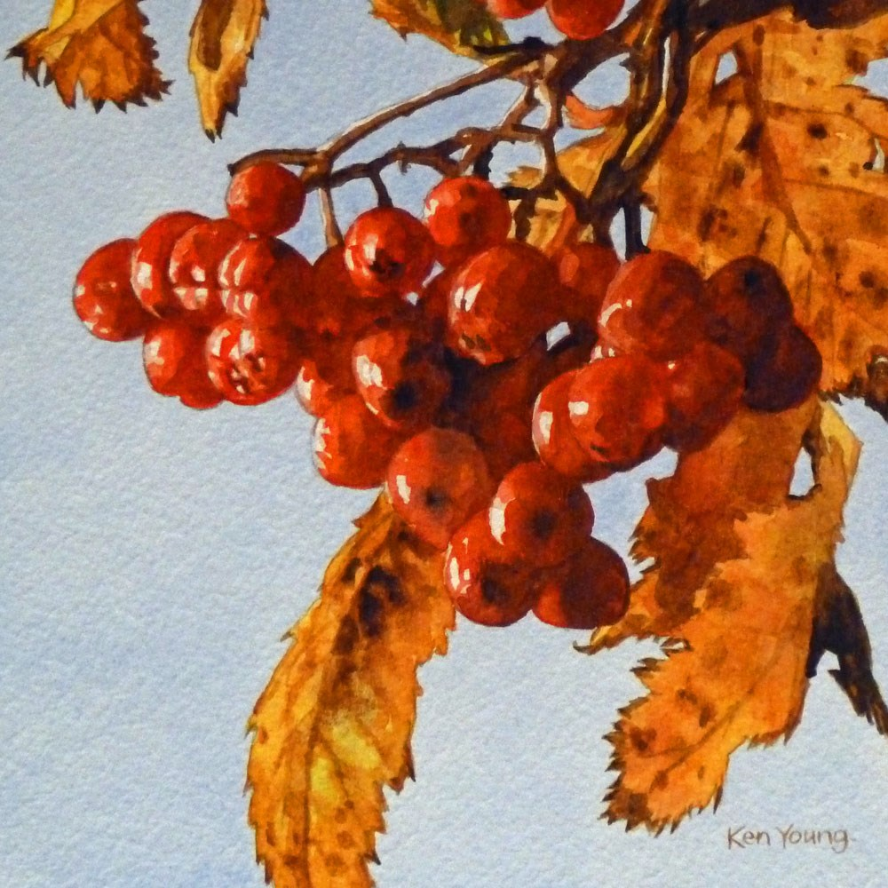 """Berries Red And Bright"" original fine art by Ken Young"