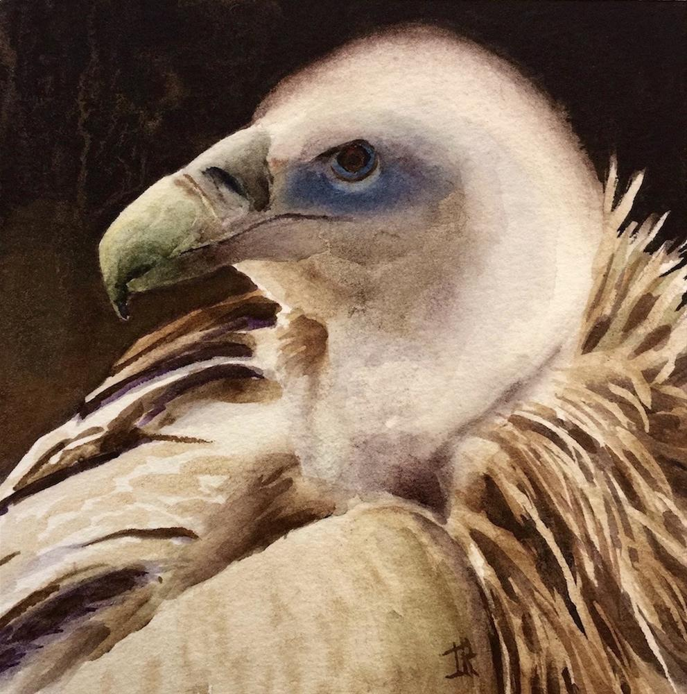 """Eurasian Griffon Vulture"" original fine art by June Rollins"