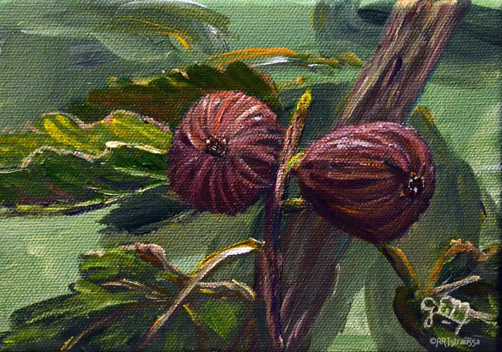 """Twin Figs"" original fine art by Gloria Ester"