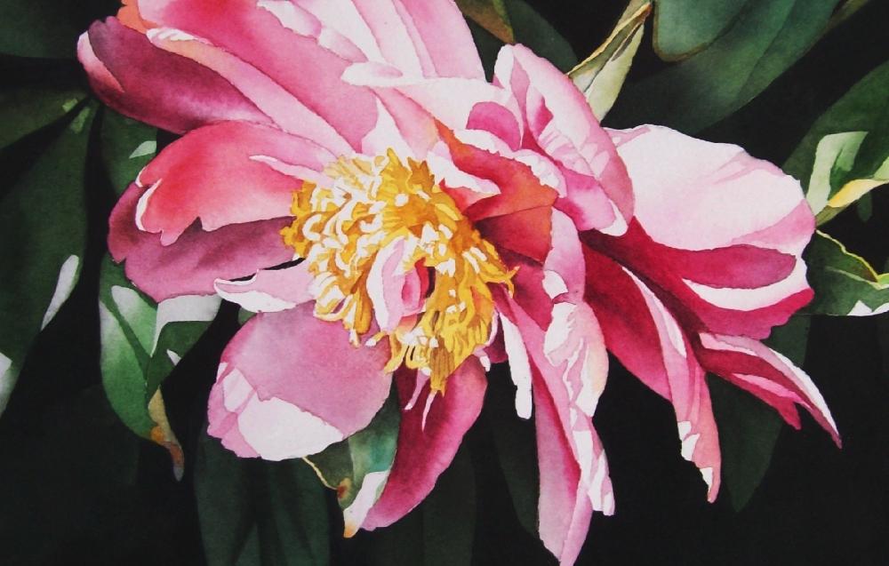 """Soft Pink Peony"" original fine art by Jacqueline Gnott, TWSA, WHS"