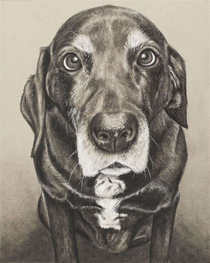 """Rigley"" original fine art by Heather Orlando"