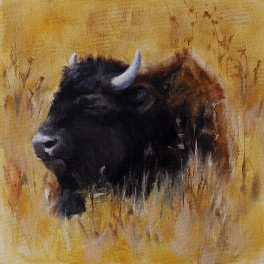 """Sleeping Buffalo"" original fine art by Pamela Poll"