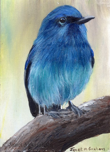"""""""Pale Blue Flycatcher ACEO"""" original fine art by Janet Graham"""