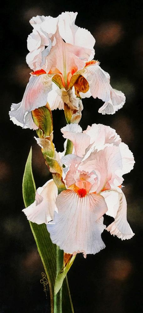 """Peach Irises"" original fine art by Jacqueline Gnott, TWSA, WHS"