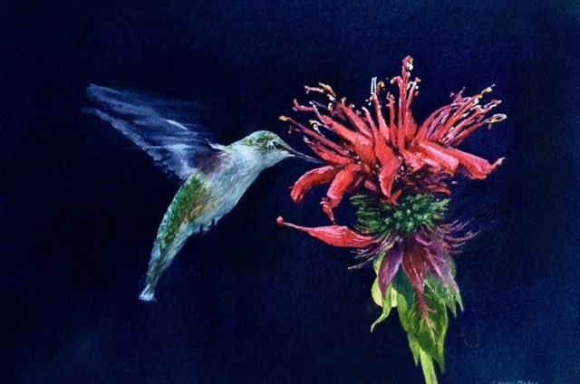 """""""Female Ruby-Throated Hummingbird"""" original fine art by Laurie Maher"""