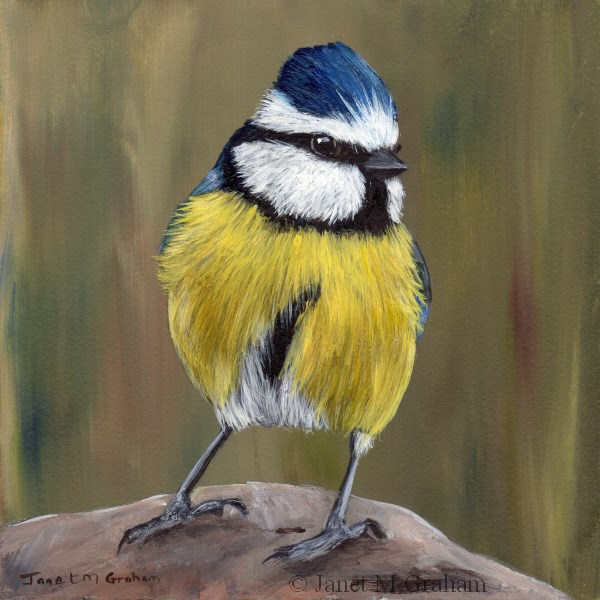 """Blue Tit No 3"" original fine art by Janet Graham"