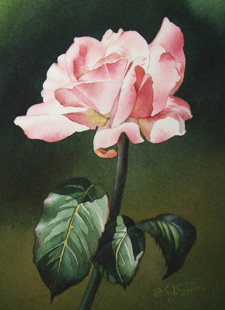 """Soft Pink Rose III"" original fine art by Jacqueline Gnott, whs"