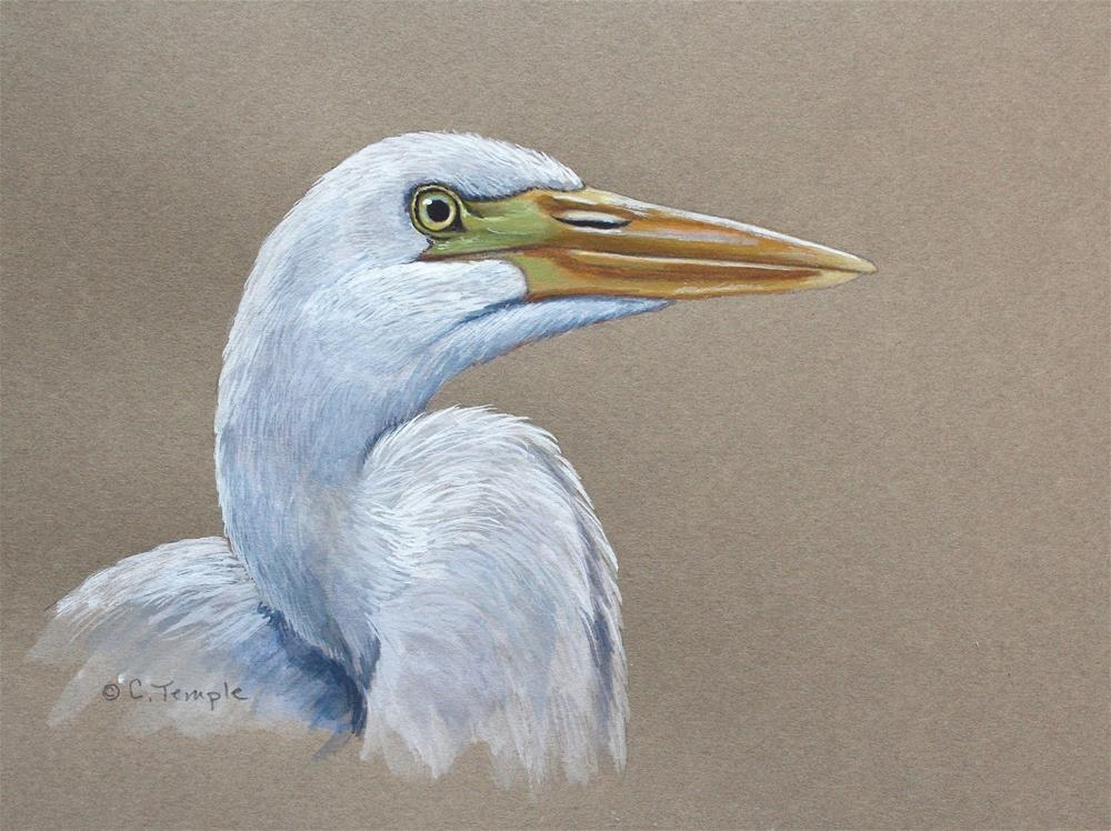 """Great Egret"" original fine art by Catherine Temple"