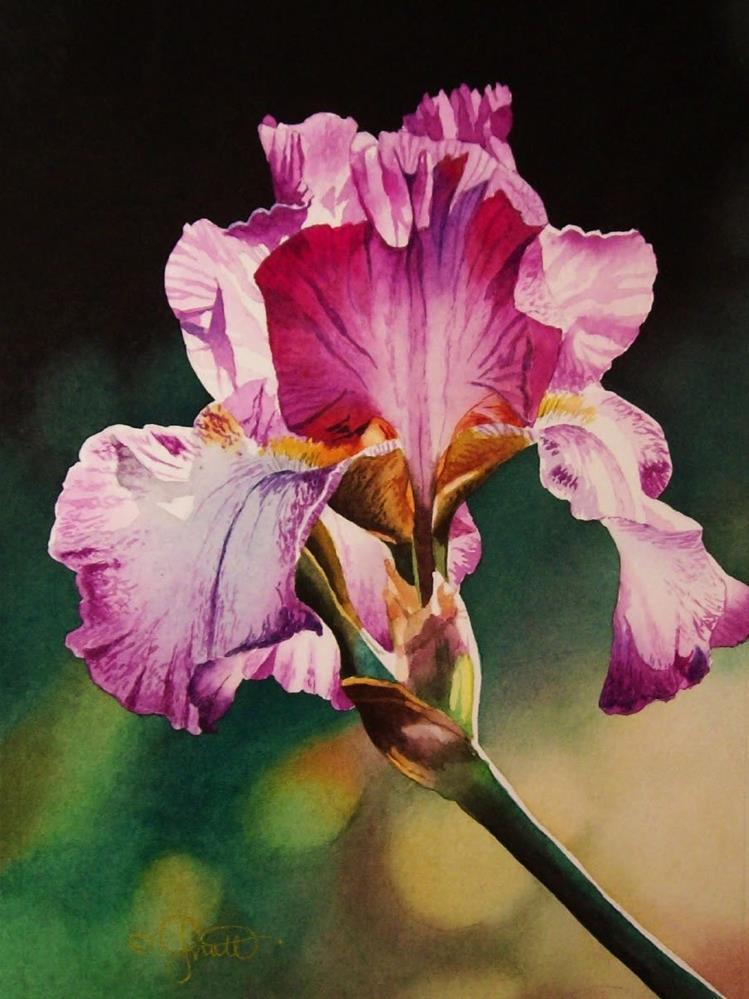 """Iris, Pink & White"" original fine art by Jacqueline Gnott, whs"