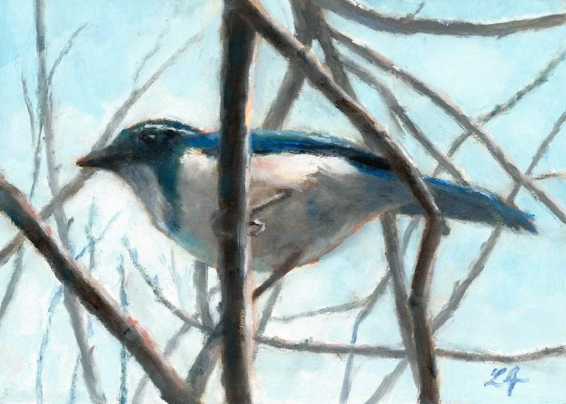 """Perching Jay"" original fine art by Linda Jacobus"